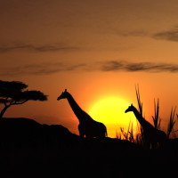 A High-end African Safari Experience Can Be A Reality