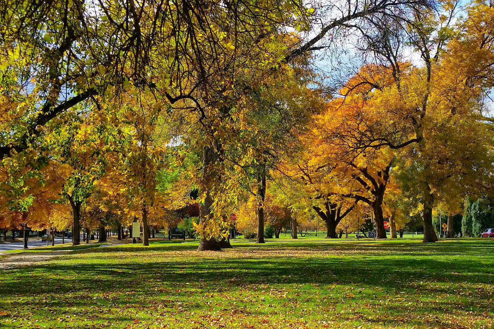 denver's city park in fall