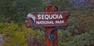 sequoia california